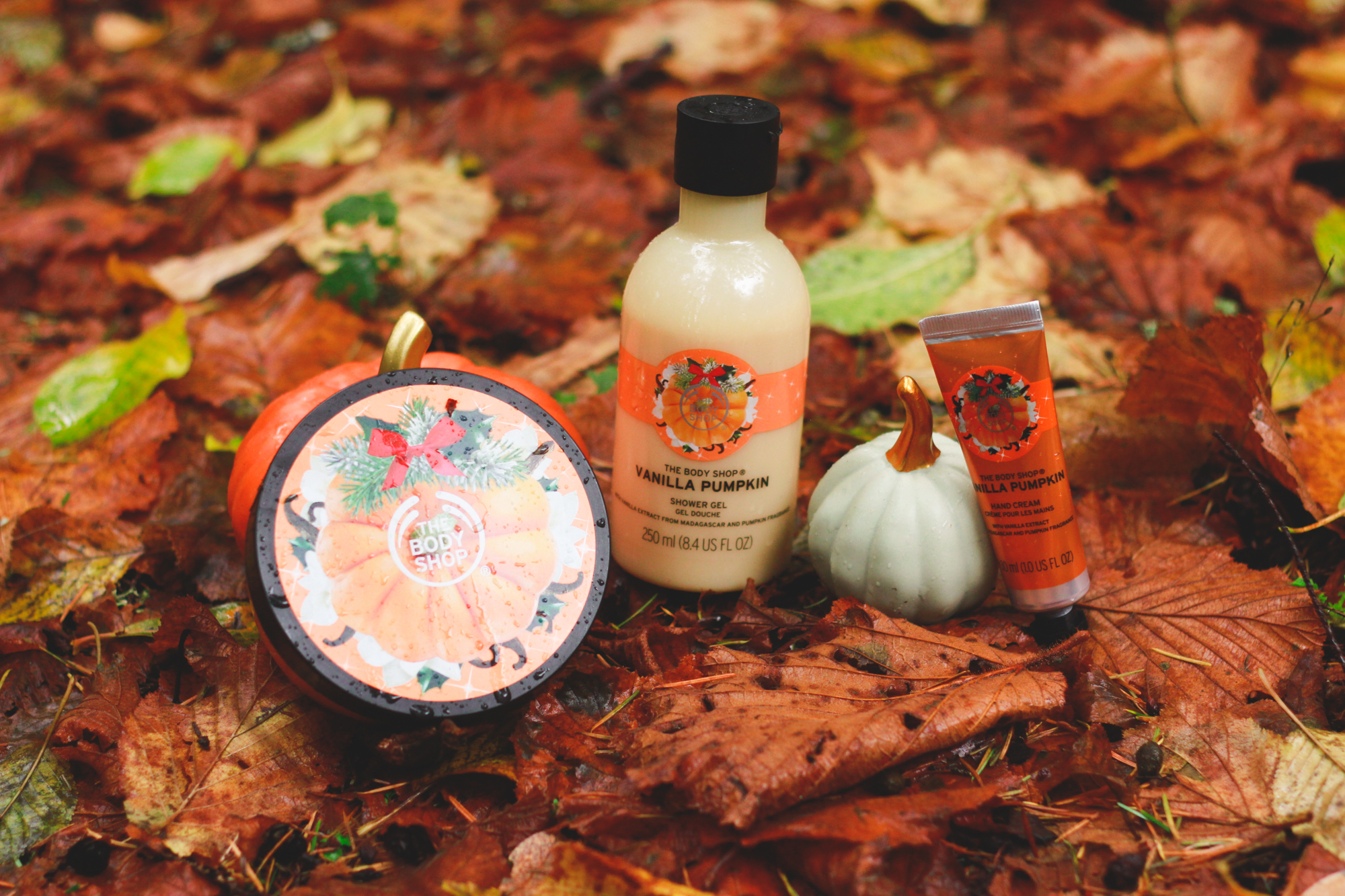 Reminiscing on Autumn | eyreeffect.com